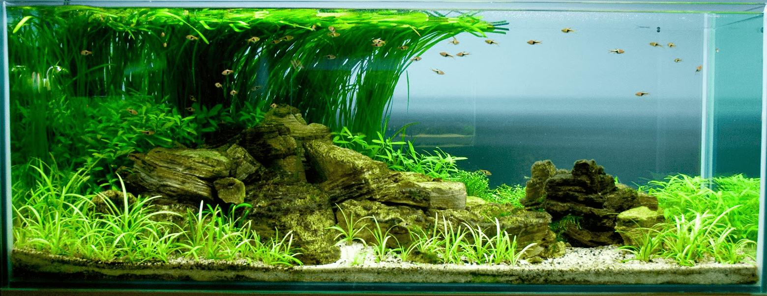 Аквариум с декоративными растениями и рыбками