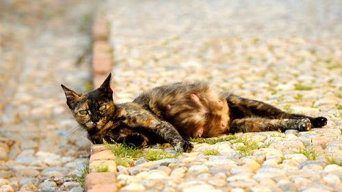 видеть кошку на сносях