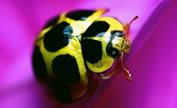 Расцветка насекомого