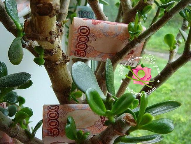 как активировать денежное дерево