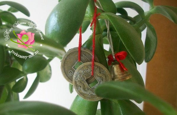 денежное дерево по фен шуй