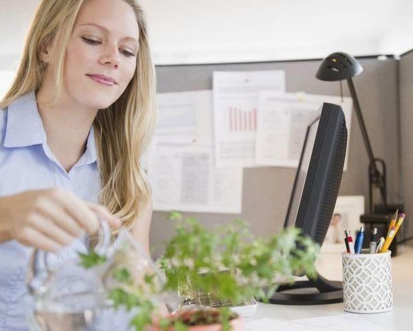 Цветы для офиса по фен-шуй
