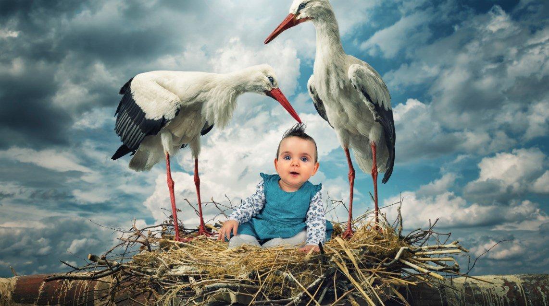 Ребёнок в гнезде аиста