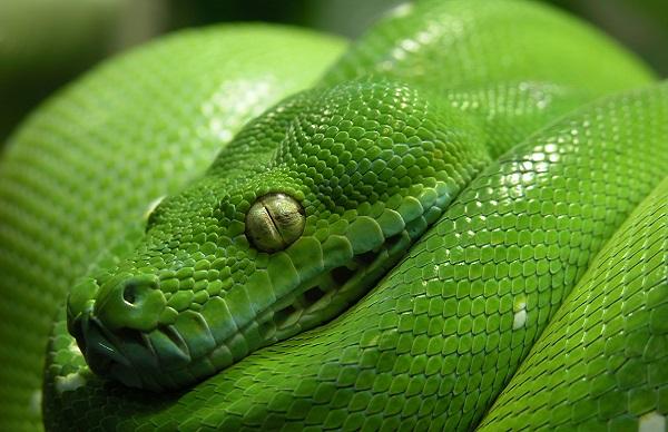 Гибель змеи