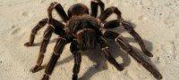 К чему снятся пауки: толкования сонников