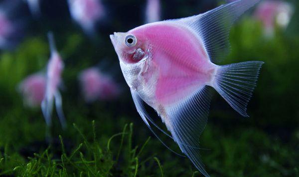 Чистая вода в аквариуме во сне – к везению
