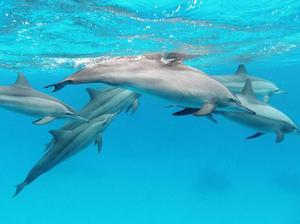 Дельфины во сне