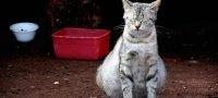 Что предвещает сон, в котором снится беременная кошка?