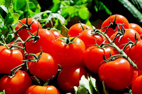 Сонник красные помидоры во сне к чему снятся красные помидоры