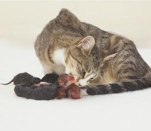 Кошка рожает: толкование сна