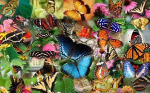 Разноцветные бабочки в сновидении