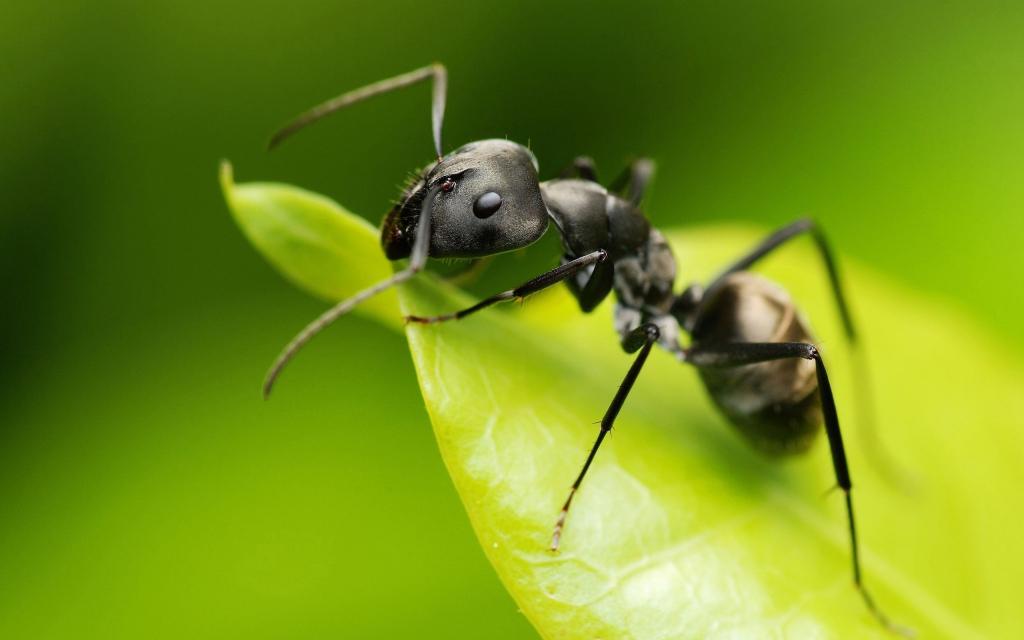К чему могут сниться муравьи заглянем в сонник
