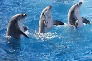 Толкование сноведения про дельфины