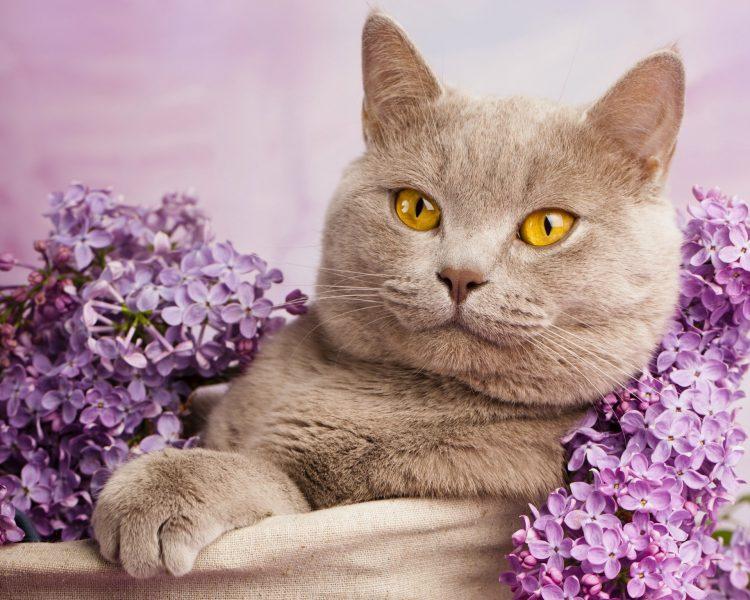К чему снится трхцветная кошка толкование по сонникам
