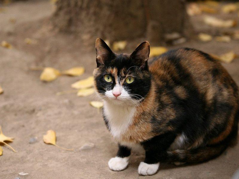 К чему снится кошка женщине — толкование по сонникам