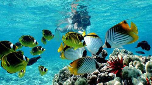 много живой рыбы в воде