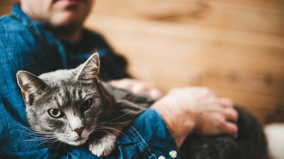 Серый кот в руках мужчины
