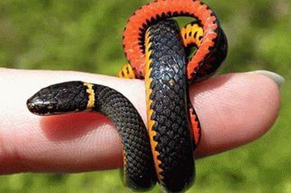 увидеть змею во сне