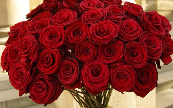 О чем расскажет цвет подаренных роз