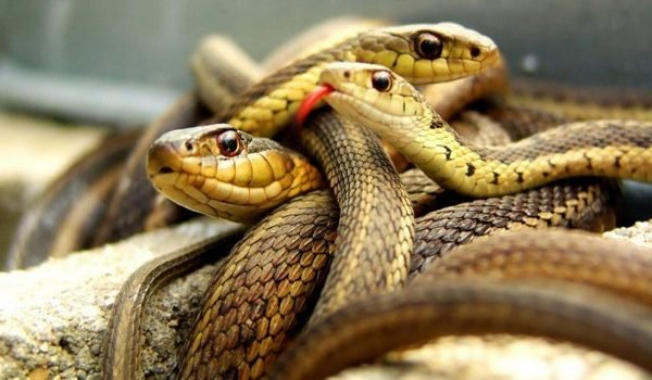 Где снятся змеи