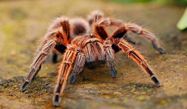 Увидеть насекомые с пауками