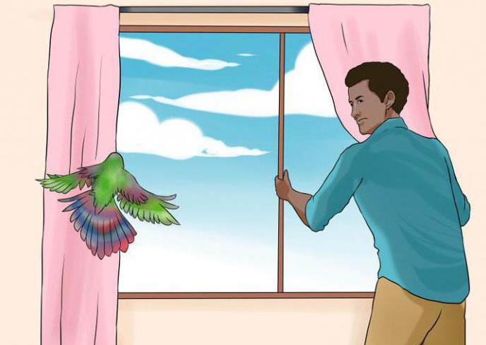 К чему снится залетевшая в дом птица