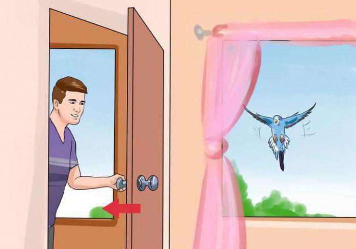 Сонник залетела птица в дом