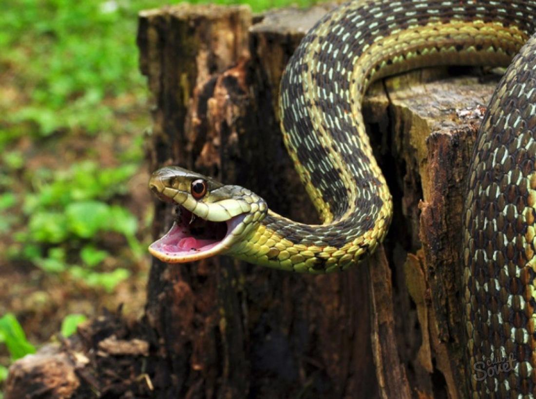 К чему снится убить змею?