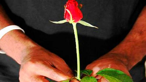 дарить красную розу