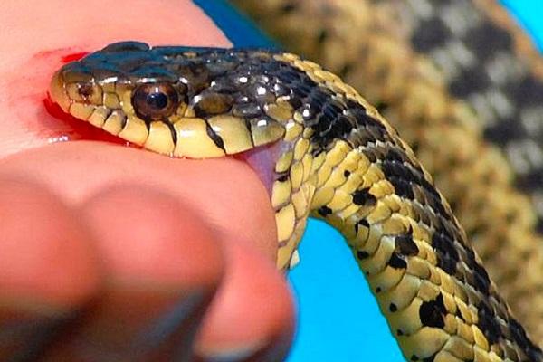 К чему снится укусила змея
