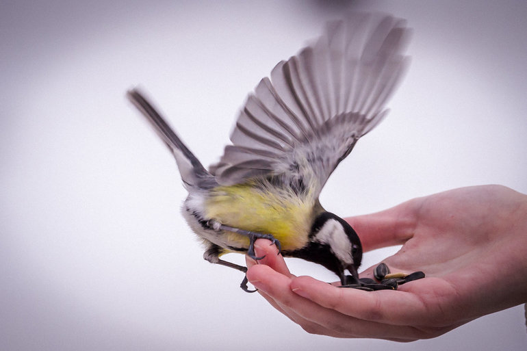 Если птичка во сне клюнула спящего в руку