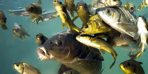 приснилась рыба в воде