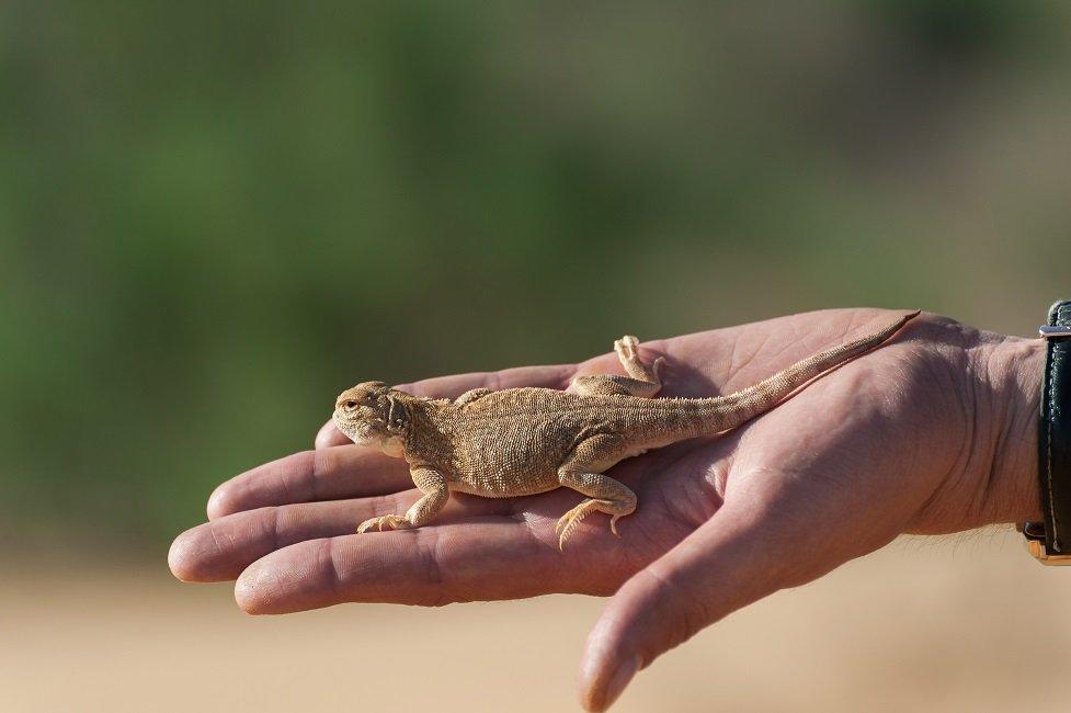Ящерица на ладони