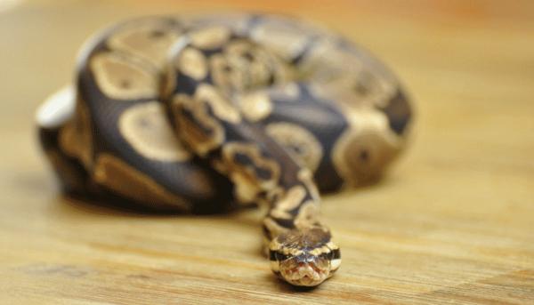 змея-во-сне-укусила